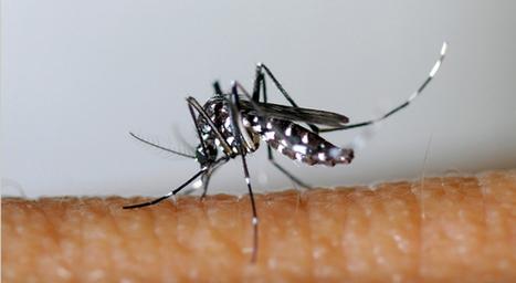 La prolifération de moustiques expliquées aux enfants | les nouvelles de Léon Kennedy | Scoop.it