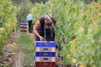 Emploi : les secteurs qui recrutent dans la région | Agriculture en Dordogne | Scoop.it