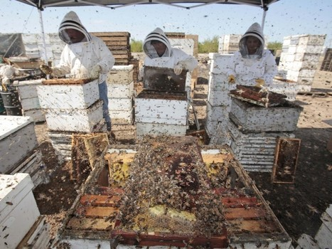 Are Agriculture's Most Popular Insecticides Killing Our Bees? : Bay ... | Crop Evolution, Domestication, and Biodiversity | Scoop.it
