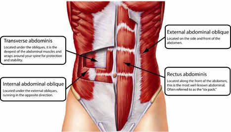 One Exercise Proven To Help Flatten Your Belly and Improve Posture | naturalbodybuilding | Scoop.it