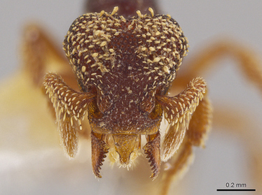University of Utah scientist discovers terrifying ant species | All About Ants | Scoop.it
