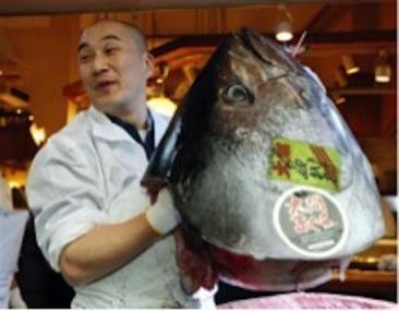 Challenges Facing Japan's Marine Fisheries - Scientific American (blog) | Underwater | Scoop.it