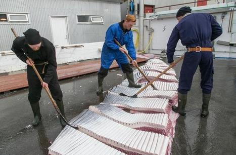 POLL: Should Norway's whaling program be stopped? | All about water, the oceans, environmental issues | Scoop.it