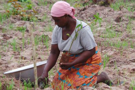 Women farmers pillar of food security ' UN agencies   Food Security   Scoop.it