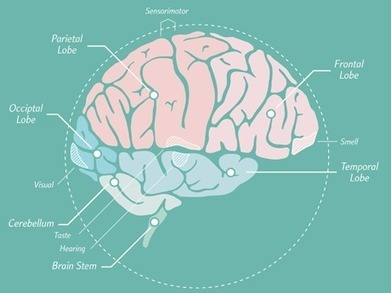 Building Brain Literacy in Elementary Students | With My Right Brain | Scoop.it