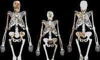 Is Australopithecus sediba the most important human ancestor discovery ever? | Aux origines | Scoop.it