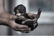 De la zoothérapie en milieu carcéral - La Presse+ | Médiation animale | Scoop.it