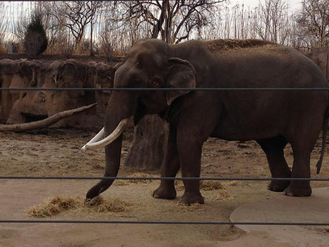 What You Can Learn from Elephant Teeth | Dentistry at Scoop.it! | Scoop.it