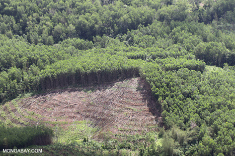 What's wrong with man-made tree plantations? | Biodiversity IS Life  – #Conservation #Ecosystems #Wildlife #Rivers #Forests #Environment | Scoop.it