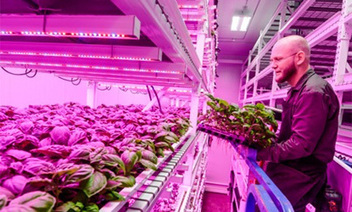 Philips' City Farming: Designing the Future of Food | Managing Technology and Talent for Learning & Innovation | Scoop.it
