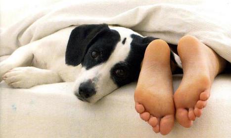 I cani lo sanno: Andrea Scanzi e l'elogio dello sguardo rasoterra | Oltre il Cuore di Lucilla News | Scoop.it
