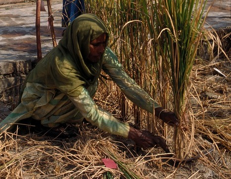 Adapting to Climate Change: Salt-Tolerant Biofuel Crops Could Turn Saline Soil ... - Treehugger | adapting to climate change | Scoop.it