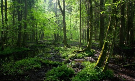 Much More Than Trees: Forests are Key to Sustainable Development | Environment & Ecology | Scoop.it