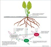 Trends in Plant Science - The rhizosphere microbiome and plant health | plant cell genetics | Scoop.it