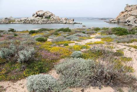 El sur de España se desertizará si no se reducen las emisiones | Climax | Scoop.it