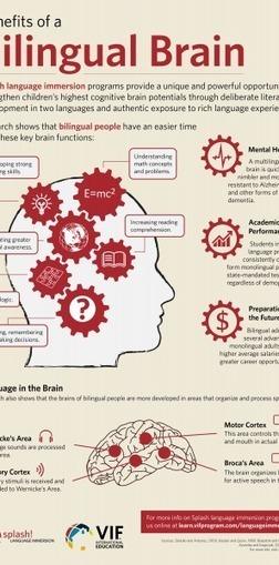 Benefits of a Bilingual Brain Infographic | AdLit | Scoop.it