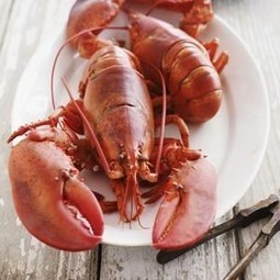 Lobster lovers, rejoice: Prices are falling | The World Planet | Scoop.it