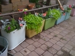 She recycles vintage toilet tanks intoplanters!   Upcycled Garden Style   Scoop.it