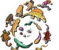 Biologie : l'évolution peut aussi être lamarckienne !   EntomoScience   Scoop.it