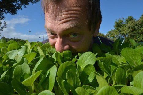 Edible gardening on the grow around the Coast - The Sunshine Coast Daily | Organic Vegetables Sunshine Coast | Scoop.it
