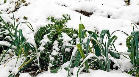 Winter Gardening Tips | home, plumbing and gardening tips | Scoop.it