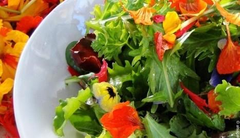 N'offrez plus vos fleurs, mangez-les ! | Plus Mince Plus Jeune | éducation alimentaire | Scoop.it