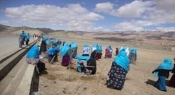 Bamyan women participate in tree planting campaign | U.S. - Afghanistan Partnership | Scoop.it