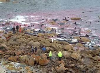 El ruido de los océanos amenaza las especies marinas | Planeta Tierra | Scoop.it