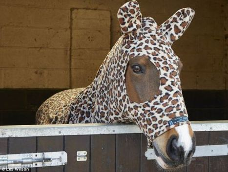 Auditioning for panto? No, they're sporting the very latest in equine fashion: Customers are chomping at the bit for horse onesies | Fashion | Scoop.it