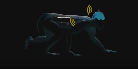 Artificial Spinal Cord Wirelessly Restores Walking in Paralyzed Monkeys | Medicine and Psychiatry | Scoop.it