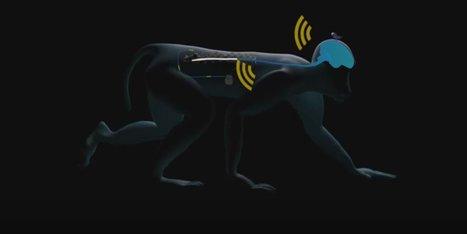 Artificial Spinal Cord Wirelessly Restores Walking in Paralyzed Monkeys | Longevity | Scoop.it