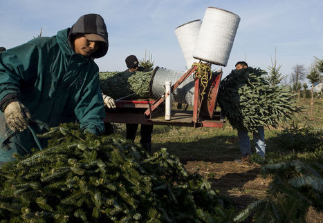 Christmas Trees Vanish from Cars as Shopping Goes Online | EconMatters | Scoop.it