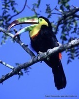 Climate Change Threatens Tropical Birds | Cultural Worldviews | Scoop.it