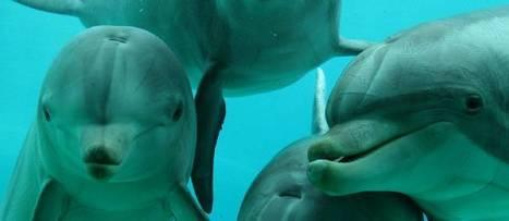 ÉCOUTEZ - Des dauphins chantent en baleine durant leur sommeil | Merveilles - Marvels | Scoop.it