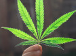 Please Think of the Children, and Legalize Marijuana   Cannabis & CoffeeShopNews   Scoop.it