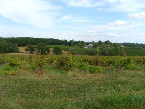 Vignes de septembre | The Blog's Revue by OlivierSC | Scoop.it