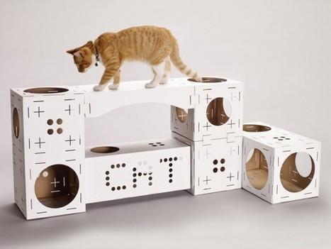 Avec BLOCKS, créez une villa cartonnée pour votre chat | 16s3d: Bestioles, opinions & pétitions | Scoop.it