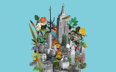 The Wild Life of American Cities | applied genomics | Scoop.it