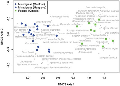 Independent Evolution of Leaf and Root Traits within and among Temperate Grassland Plant Communities   Data Science   Scoop.it