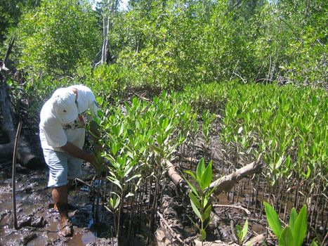Temas medioambientales tienen protagonismo creciente en El Salvador | Río+20 El Salvador | Scoop.it