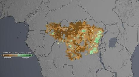 Drought may take toll on Congo rainforest, study finds | Sustain Our Earth | Scoop.it