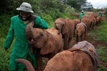 Baby elephant rescued after anti-poaching flight in Kenya | Wildlife Trafficking: Who Does it? Allows it? | Scoop.it