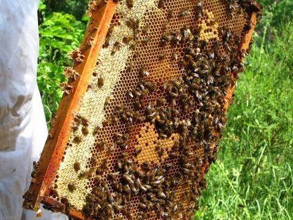 Comment choisir son miel ? | dietconseil actualite dietetique nutrition évolution | Scoop.it