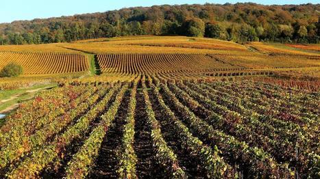 Le vin, un atout économique pour la France | Verres de Contact | Scoop.it