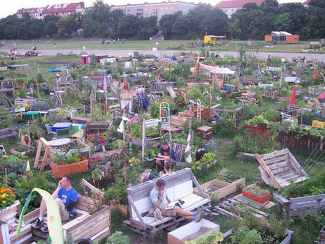 Practicing Commons in Community Gardens: Urban Gardening as a Corrective for Homo Economicus | Sustainable Futures | Scoop.it