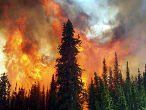 Arctic Forest Fires Release Old Carbon, Impact Climate Change | Climate change challenges | Scoop.it