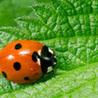 Pesticides et traitements phytosanitaires