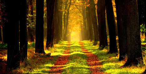 Conservación de los bosques del mundo - Actualidad Medio Ambiente | Actualidad forestal cerca de ti | Scoop.it