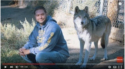 Weekly Heart Opener: Rescued Wolves Rescue Wounded Veterans | Eileen Anglin | Compassion in Action | Scoop.it