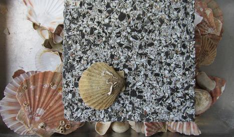 Un béton fabriqué à partir de coquilles Saint-Jacques | Ressources pour la Technologie au College | Scoop.it